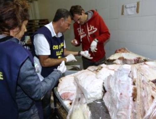 CONTROLLI ITTICI, ROMA: SEQUESTRATI 680 CHILI DI SQUALO ELEFANTE VENDUTO PER SQUALO MANZO