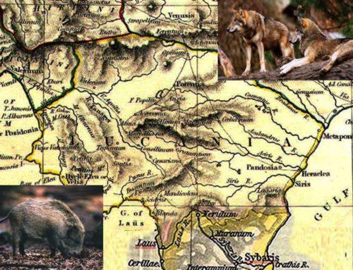 Basilicata: proteste allevatori per lupi e cinghiali, incontro in Regione