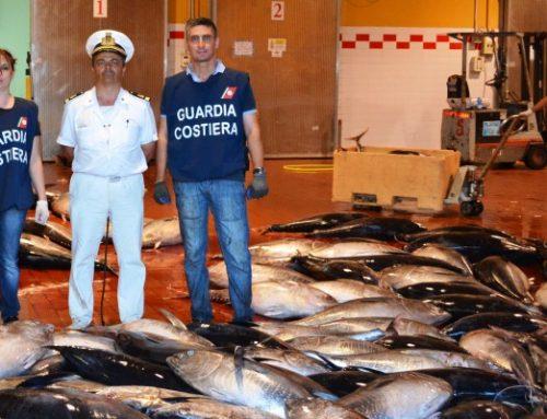 Guardia costiera di Milazzo sequestra 30 tonnellate di tonno rosso